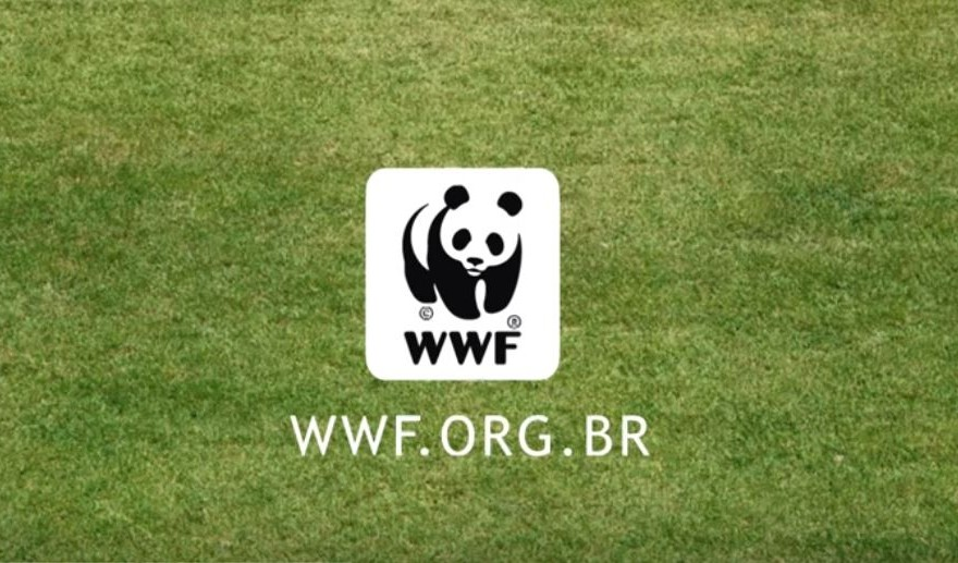 WWF e il campo da calcio brasiliano
